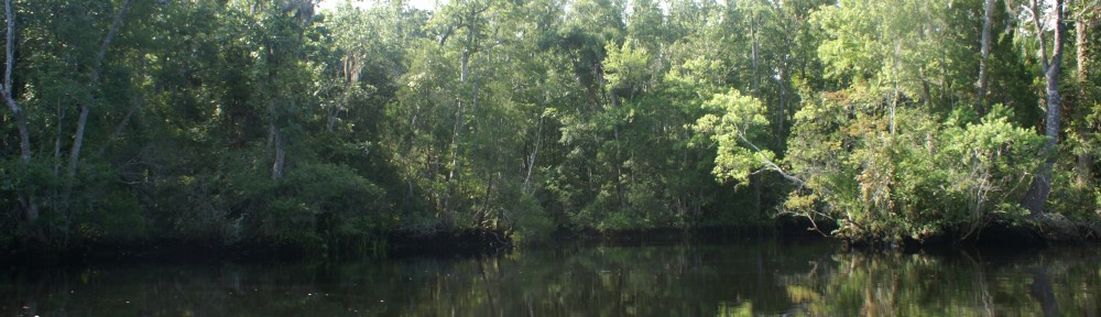 Lower Aucilla River